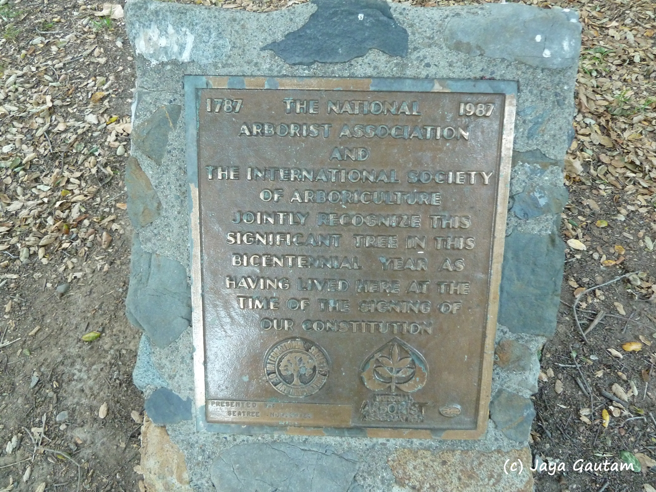 Plaque commemorating a tree's 220+ year existence